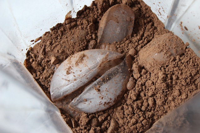 Cocoa Powder and Ice in the Blender for Chocolate Milk