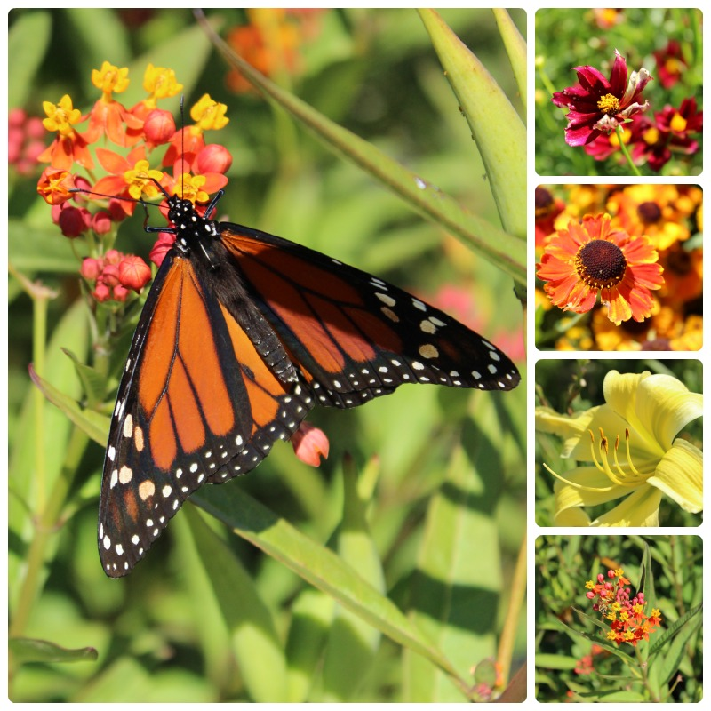 Flower and butterfly collage